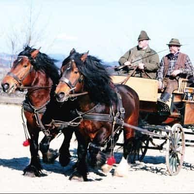 Mit Pferd und Wagen unterwegs