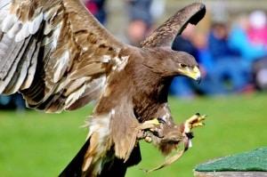 Vogel- und Greifvogel-Schau